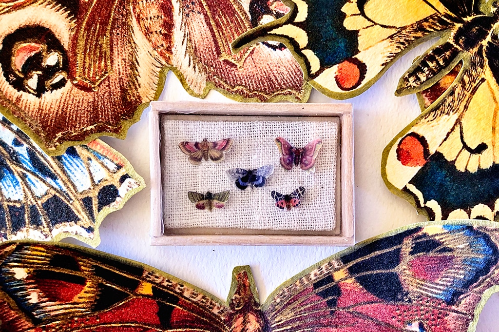 How To Make a Miniature Butterfly Shadowbox