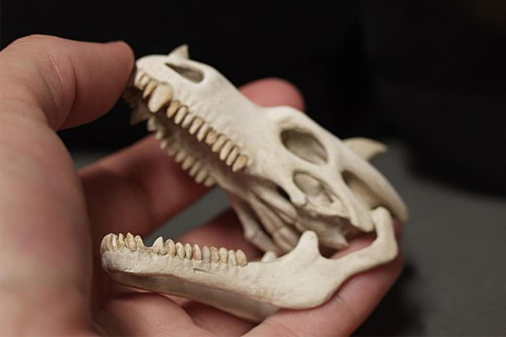 Miniature Dragon Skull by Tori West